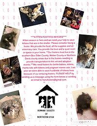 Kitten Foster Post.jpg