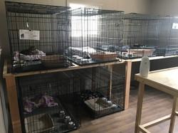 Trailer 4 - New Kitty Quarantine