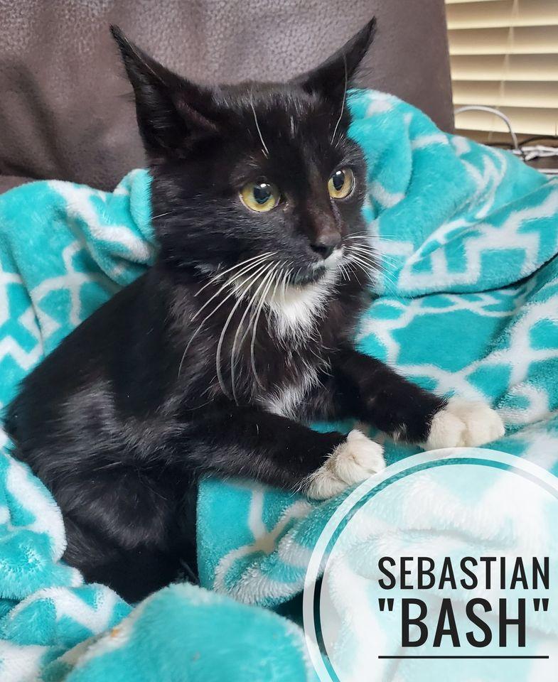 Sebastian (Bash)