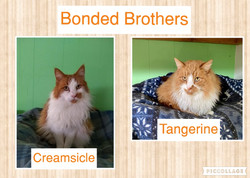 Creamsicle and Tangerine