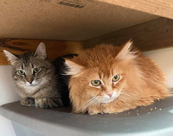 Max The Tabby and Gingersnap