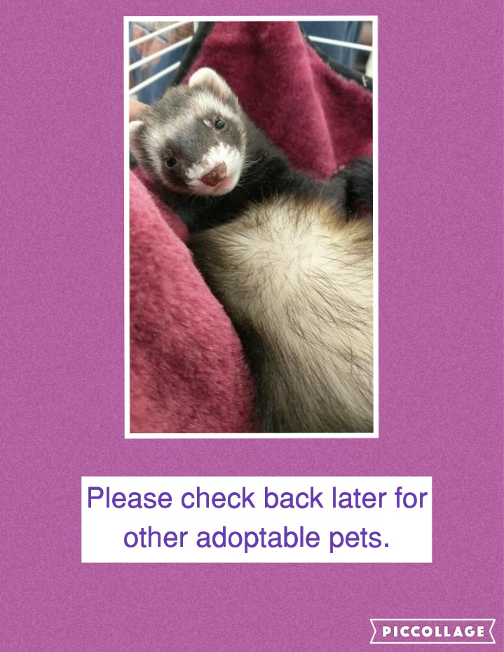 Other Adoptable Pets