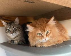 Max and Gingersnap