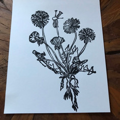 Dandelion Lifecycle Print