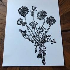 Dandelion Lifecycle Print