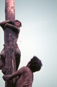 1974 Cuccagna 22 .JPG