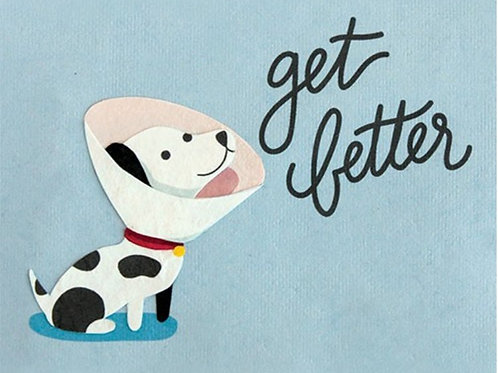 Get Better Dog