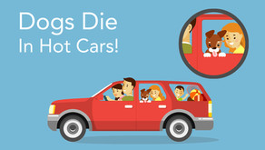Dogs die in hot cars.