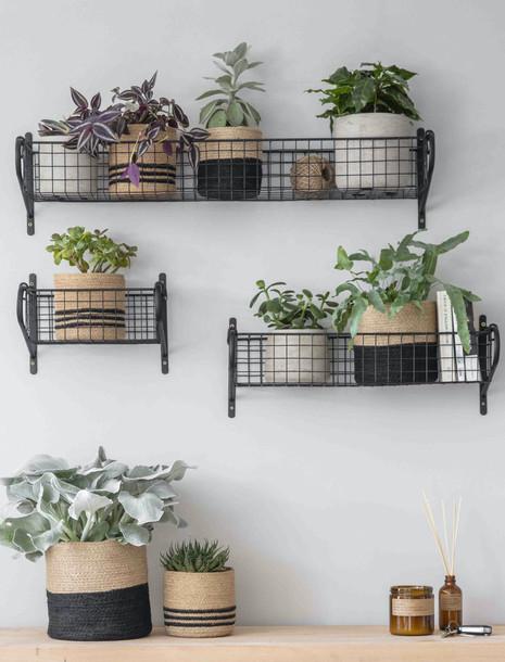 Hanging Basket.jpg