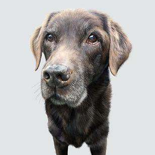 Dog two Harriette.jpg