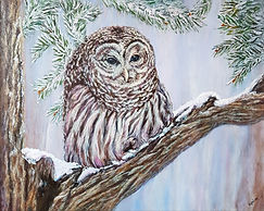 Barred Owl 16x20.jpg