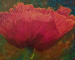 Illuminated Poppy