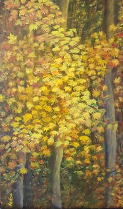 Seasons II Autumn in the Woods