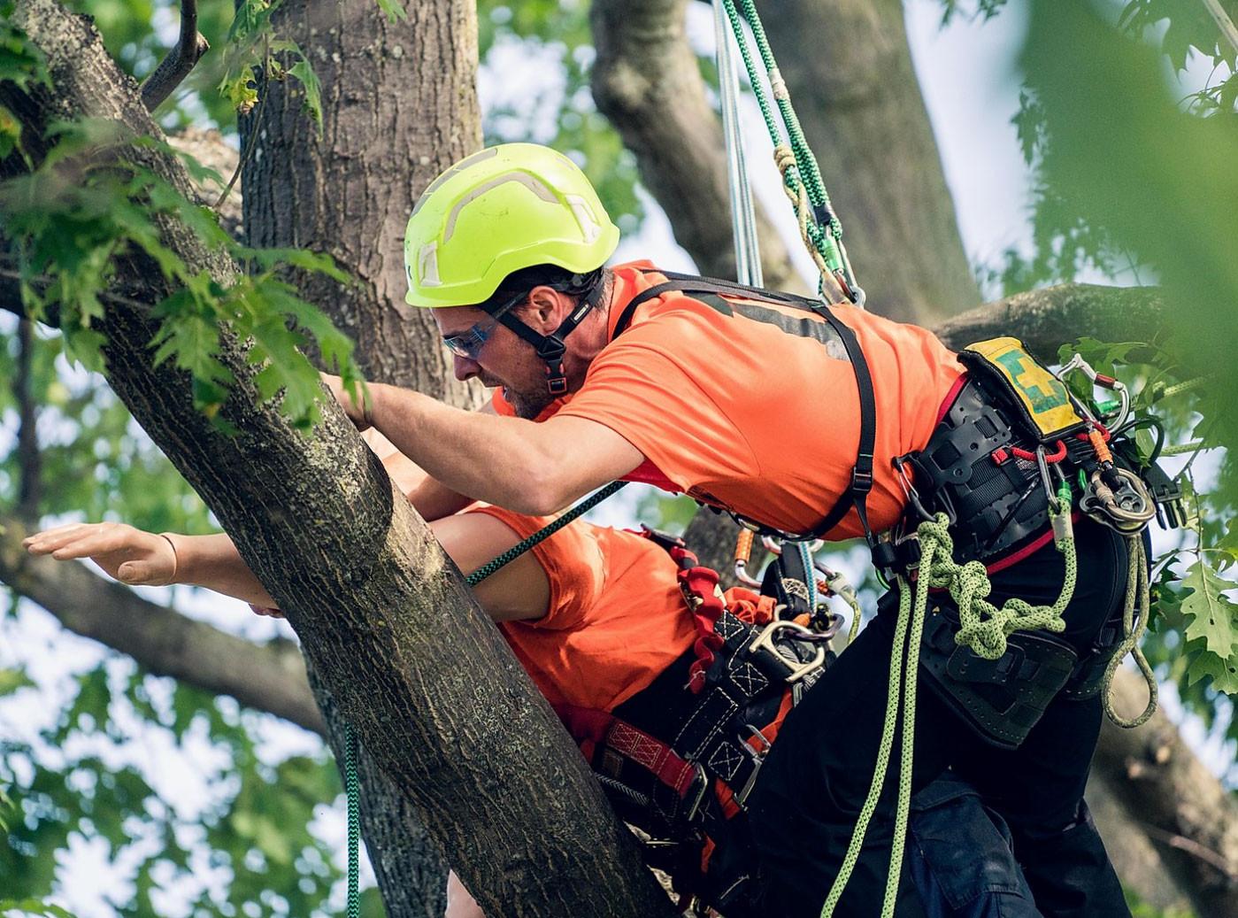 Brooklin-Tree-Care-Home-Main.jpg