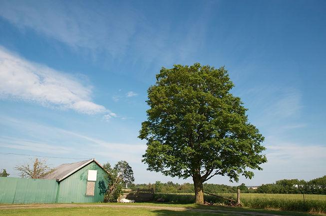 Batty-Farm-Sugar-Maple-DSC_0023.jpg