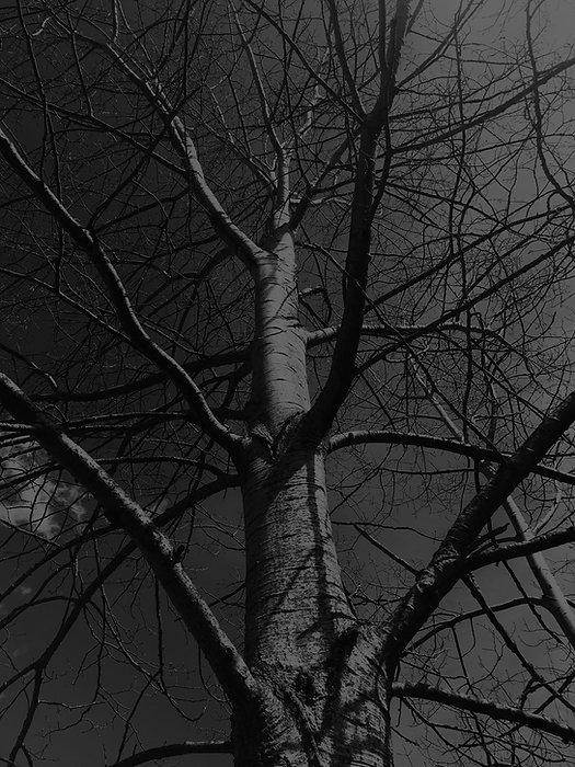 Dilts-Design-Group-Big-Climbing-Tree-GS-