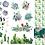 Thumbnail: DB Transfer - Cactai & Succulents