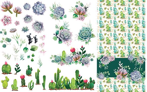 DB Transfer - Cactai & Succulents