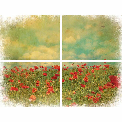DB Transfer - Field of Flowers