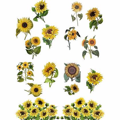 DB Transfer - Sunflowers