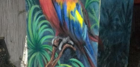 parakeet bathroom