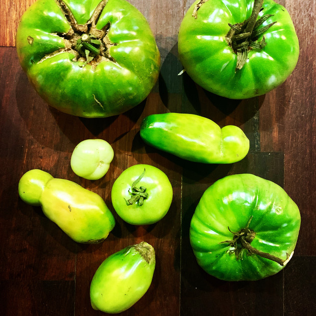 Local Green Toamatos ready for chutney.J