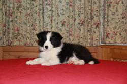 Joyce 7 weeks old