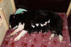 Lucy and her newborns