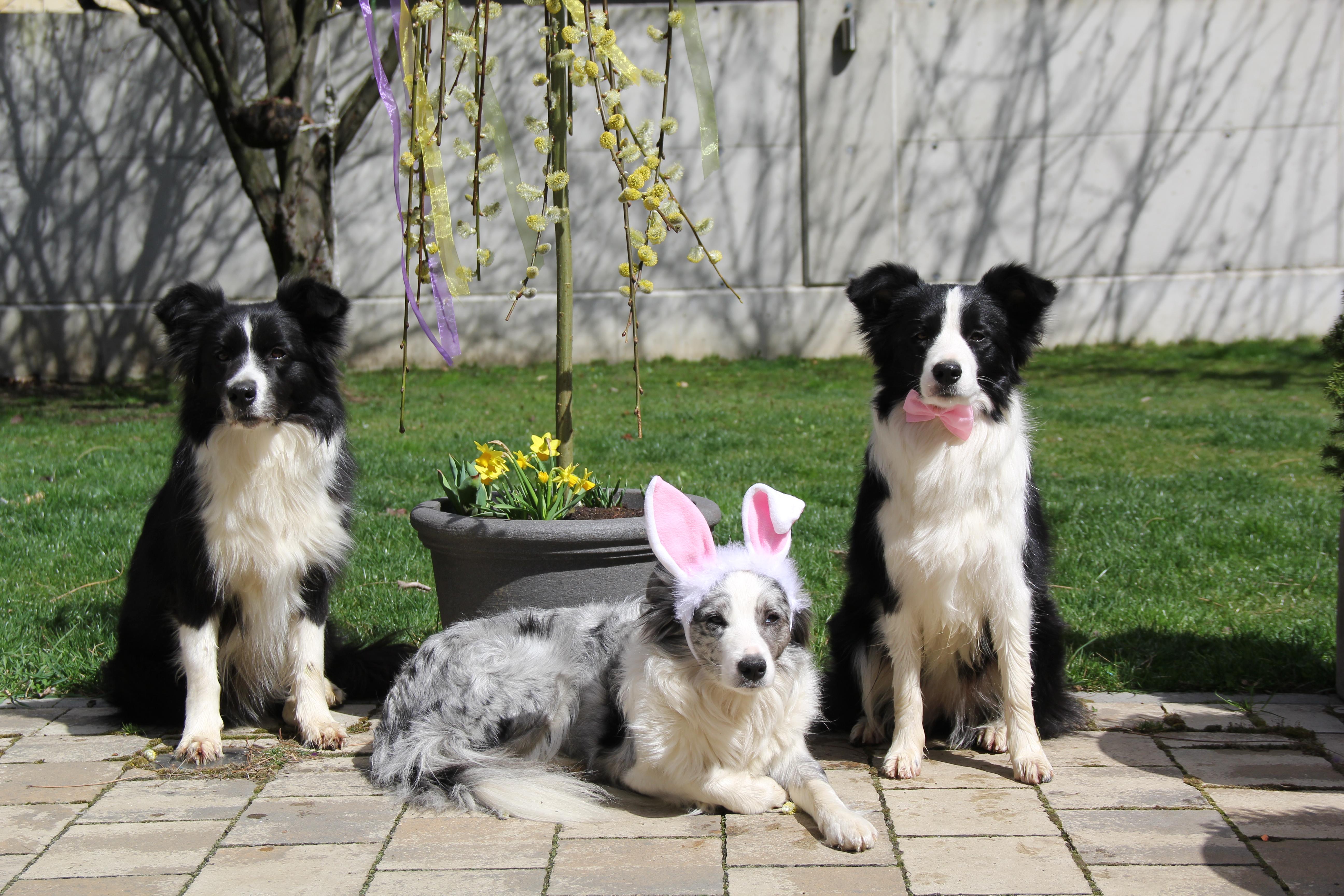 Lucy, Frosty & Joyce