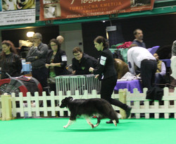 CACIB Sempeter: Lucy in main ring