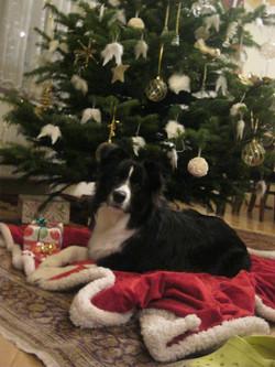 Lucys first christmas :)