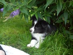 Puppy Lucy
