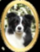 profil maya.png