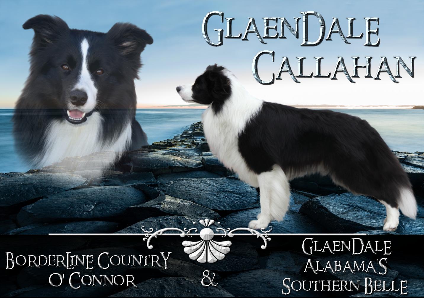 Glaendale Callahan_Studdog collage 07_20