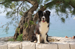Lucy on the beach in Split