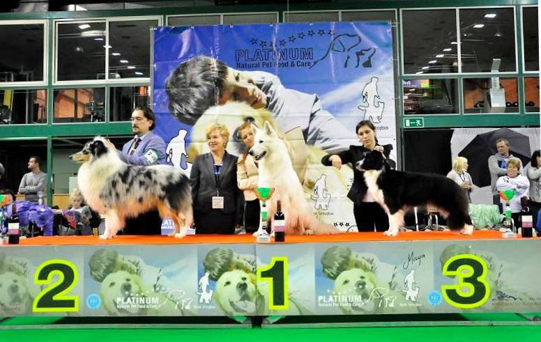 CACIB Sempeter: Lucy 3rd place FCI1