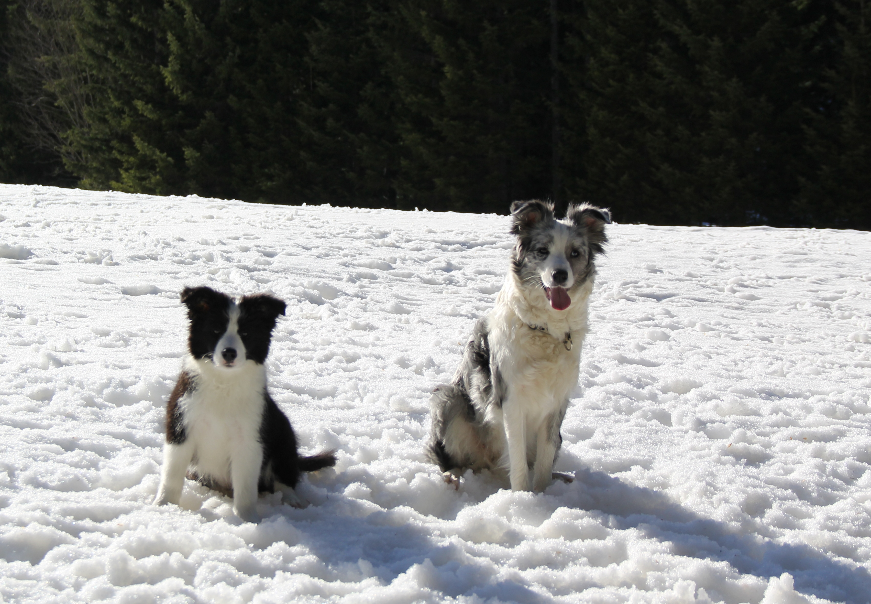 Joyce & Frosty