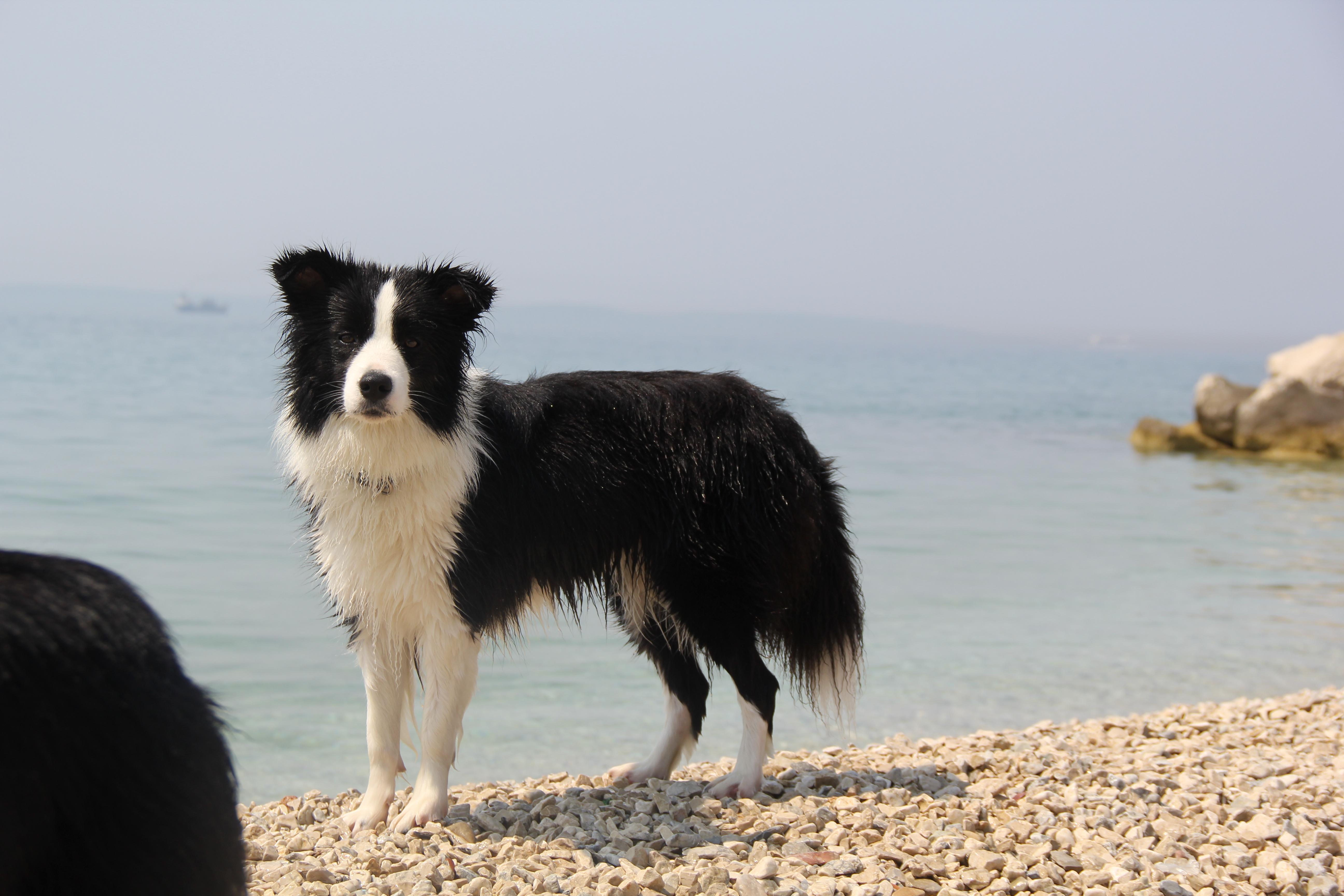 Joyce on the beach in Split