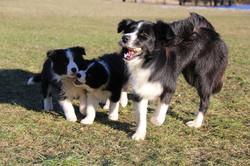 Joyce, Indy & Lucy