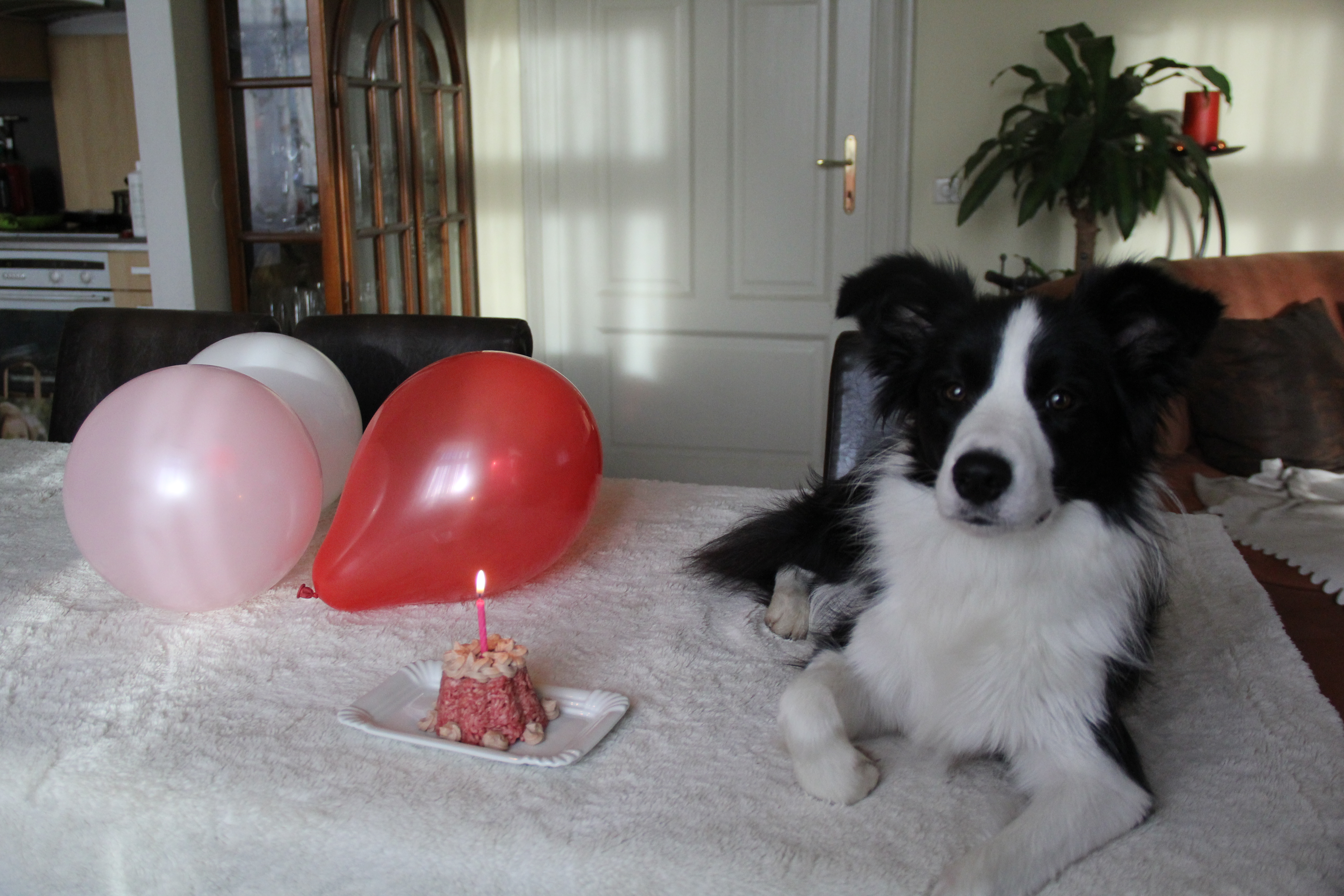 Joyce's 1st birthday
