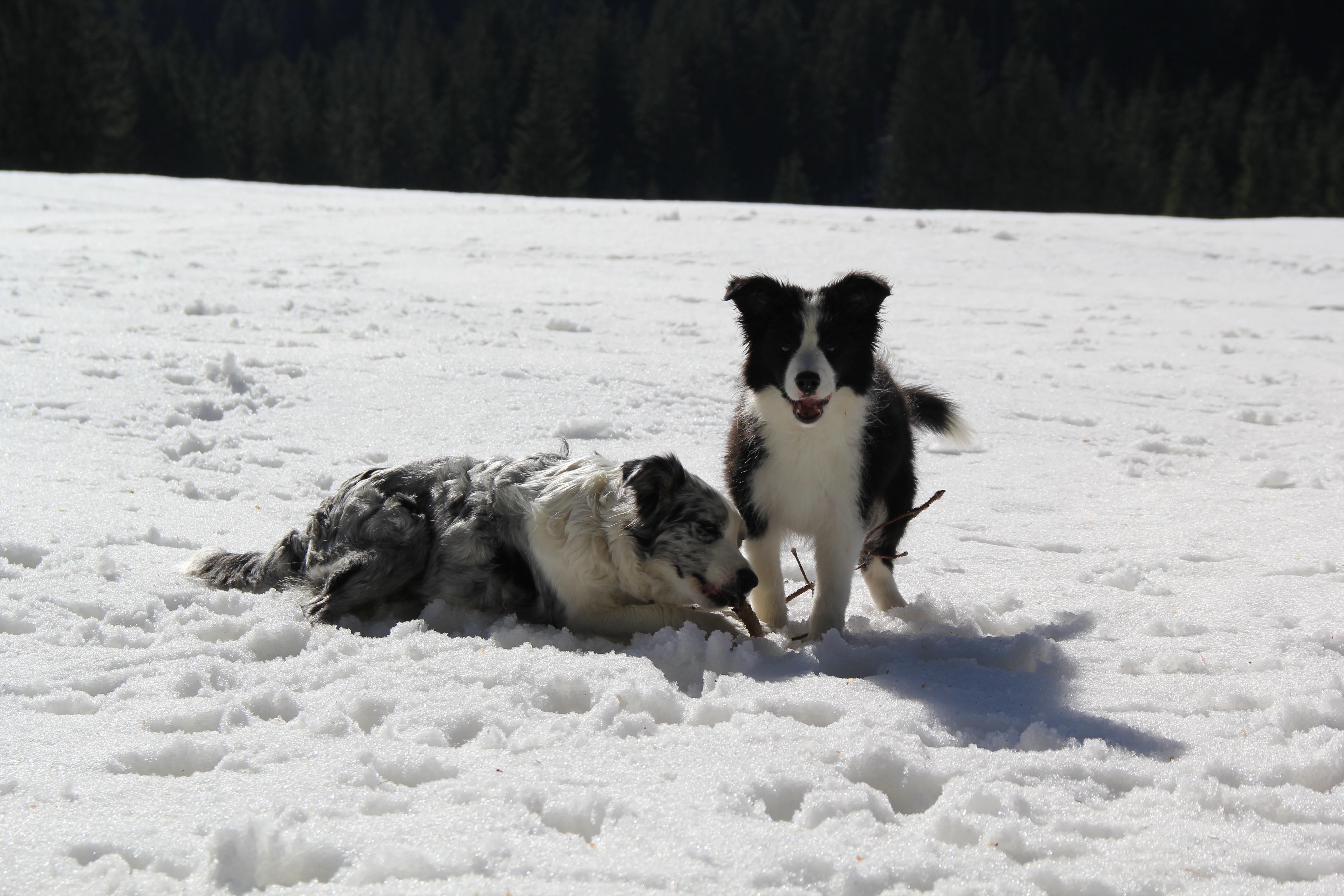 Frosty & Joyce