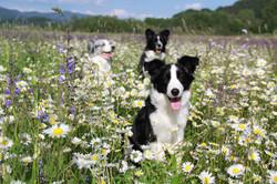 On a sunny meadow