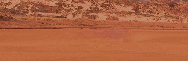 Desert-Dandelion-exempel_utan_ram-desert