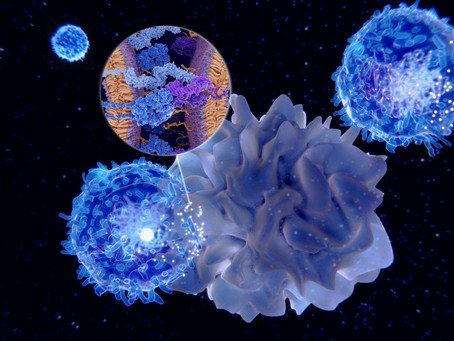 Decentralized Intelligence: Lessons from the Immune System
