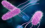 Resistencia bacteriana en enterobacterias