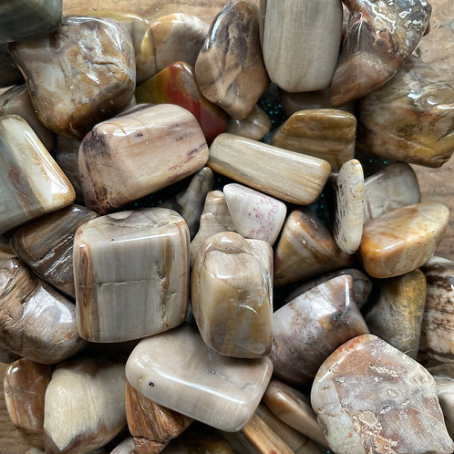 Petrified Wood (Tumbles)