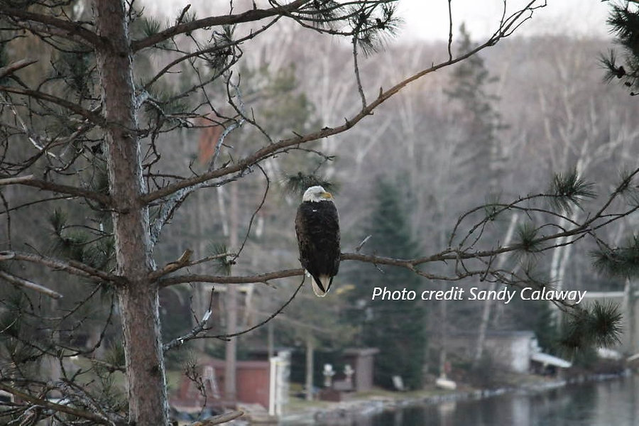 Eagle with photo credits.jpg