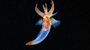 """Documentary """"Arctic. Underwater Aliens"""""""