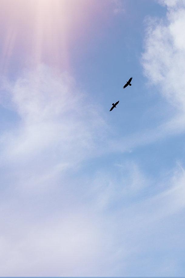 Deux_oiseaux.jpg