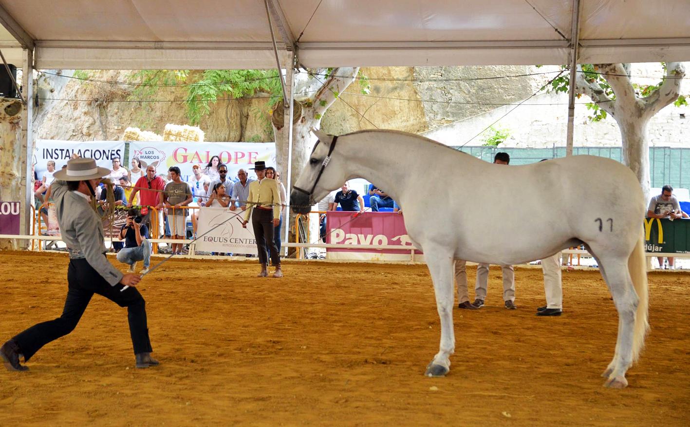 Andujar Equestrian